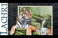 Tiger in colored pencil  - Time Lapse tutorial by Lachri