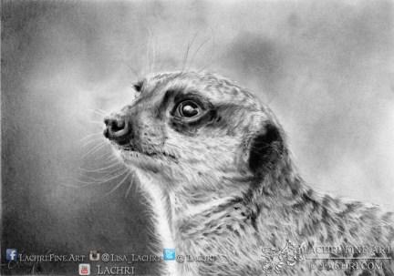 Meerkat graphite (pencil) drawing