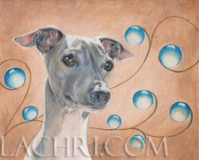 Italian Greyhound in colored pencil