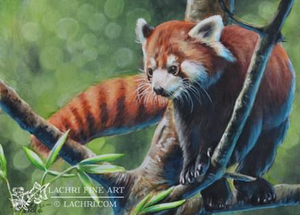 Red Panda in Inktense