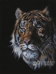 Tiger in Colored Pencil on Black Paper