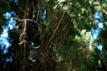 Rama seca sobre oleo pino