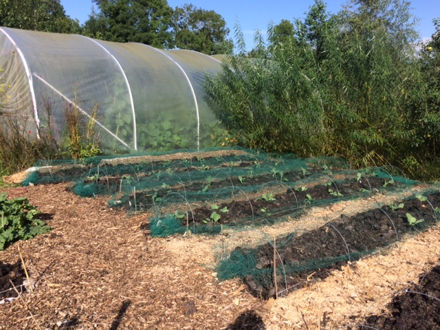 Scythes, fresh planting and the chicken hordes