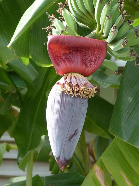 Receta Vietnamita Ensalada De Flor De Banana La Cocina De Tendencias