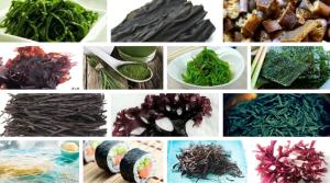 Cómo cocinar las algas marinas