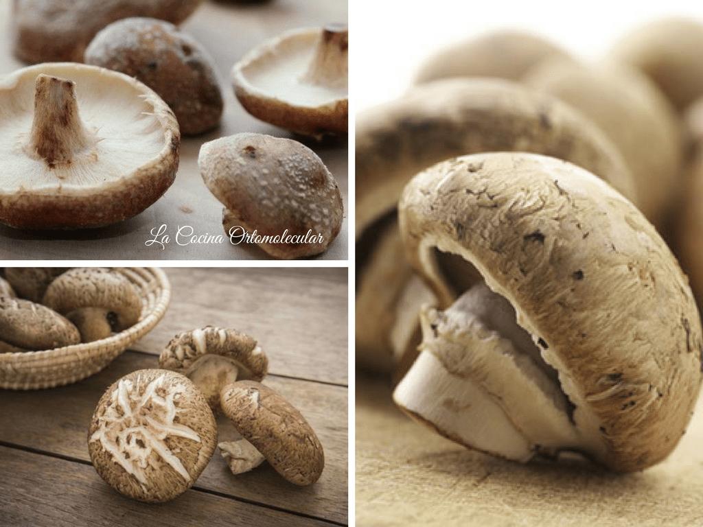Los hongos y sus beneficios para la salud