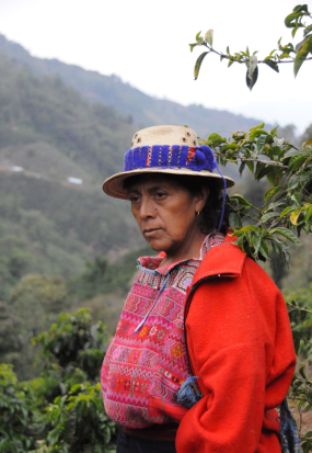 Guatemala-CafeImports-Imgs20