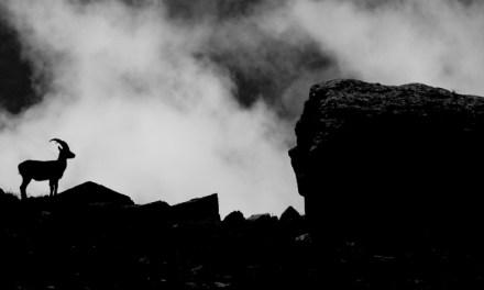 Poveste din Alpi cu Sabin Husariu