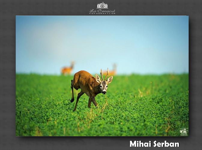 Mihai Serban resize 1