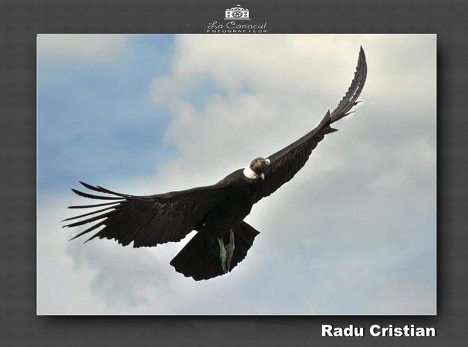 Radu Cristian resize