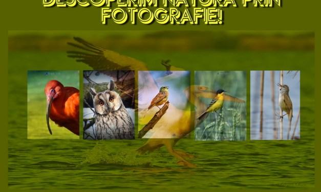 Descoperim Natura Prin Fotografie, 92 de pasari din Romania si din Europa