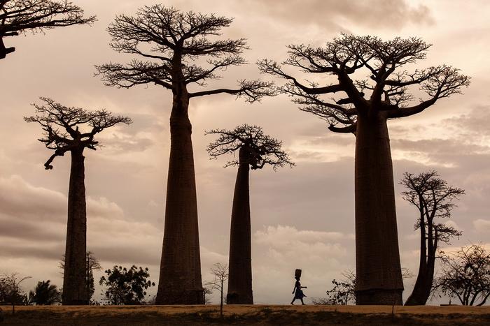 ROdanmiD3 trees resize