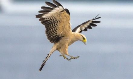 Scurta introducere in fotografia Wildlife!