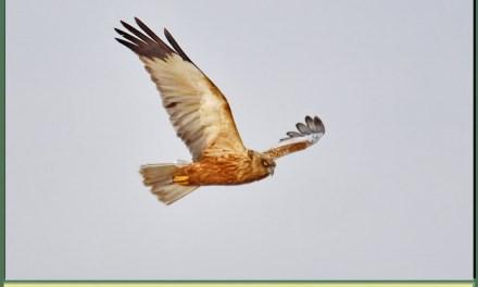 Descoperim Natura Prin Fotografie, Erete De Stuf
