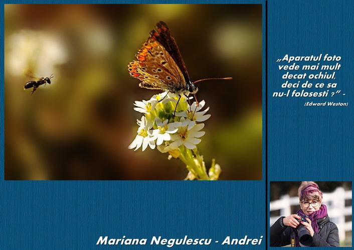 mariana negulescu andrei resize