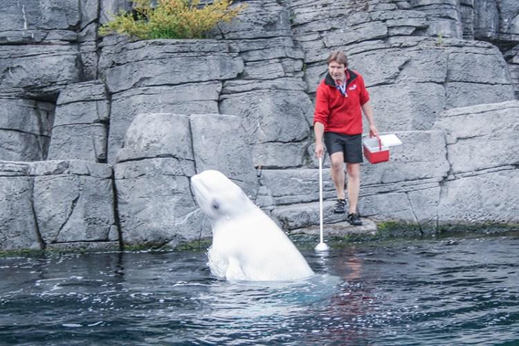 beluga aquarium de vancouver