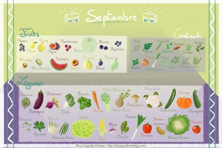 fruits et l gumes de septembre calendrier de saison 9 la coquette ethique. Black Bedroom Furniture Sets. Home Design Ideas