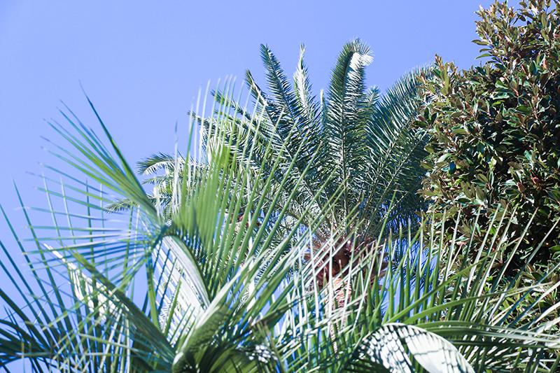 monaco plante
