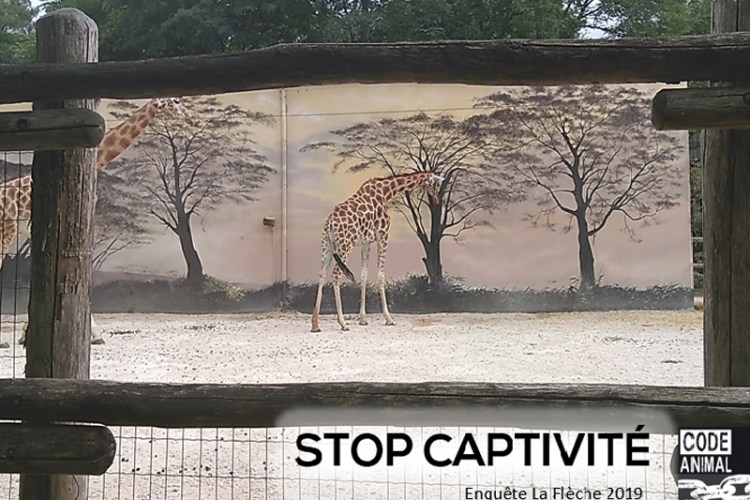 Code animal association contre captivité animaux sauvages girafes elephants