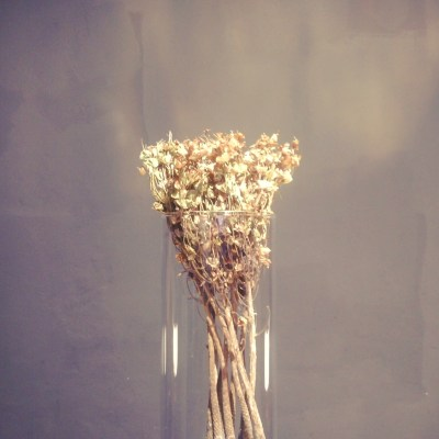 Intervista I am a flowerista
