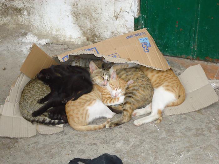 Caja de gatos