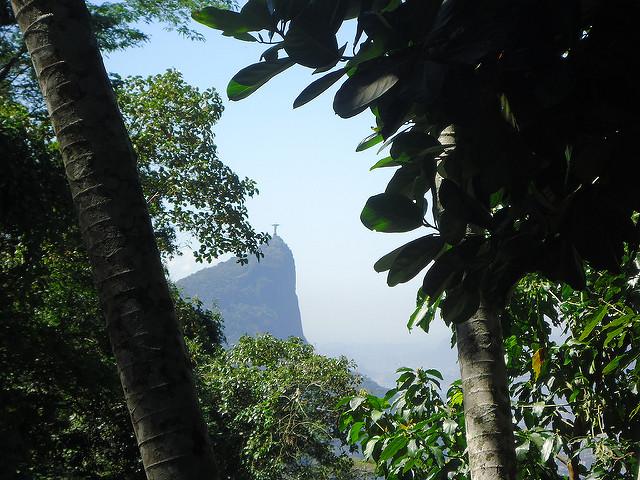 Floresta de Tijuca