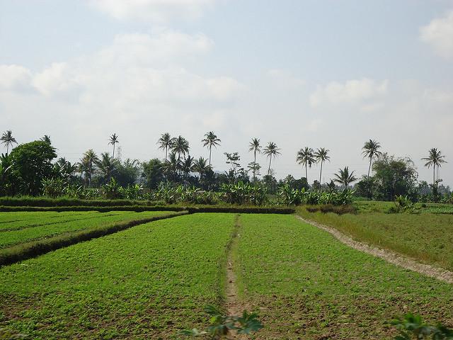 Campos de Java