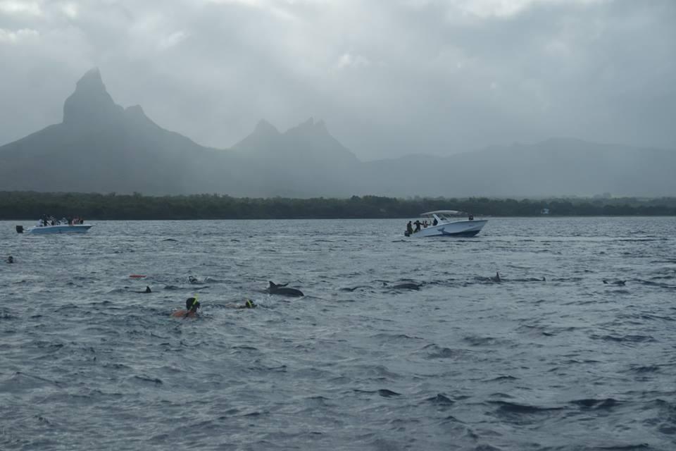Excursión de los delfines