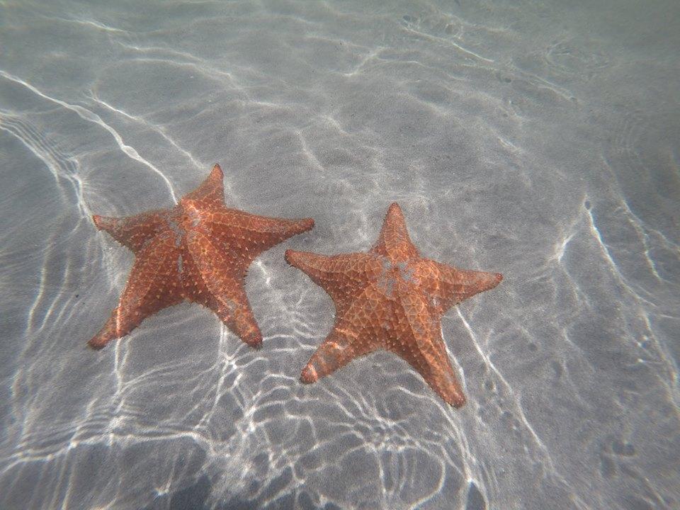 estrellas-de-mar-bocas-del-toro