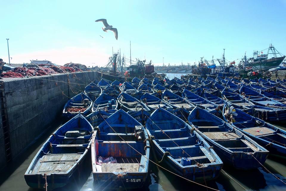 Qué ver en Essaouira: el puerto pesquero