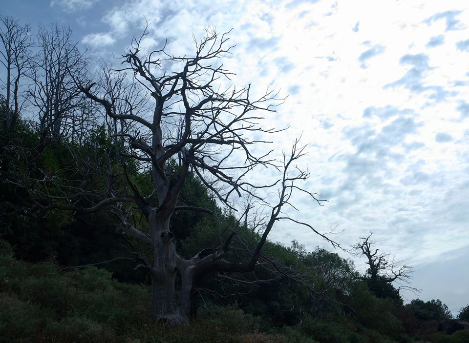 Bosque de Tello, Lanjarón