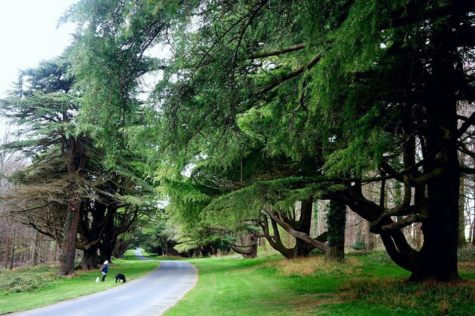 Bosque de Tollymorest, ruta de Juego de Tronos en Irlanda del norte