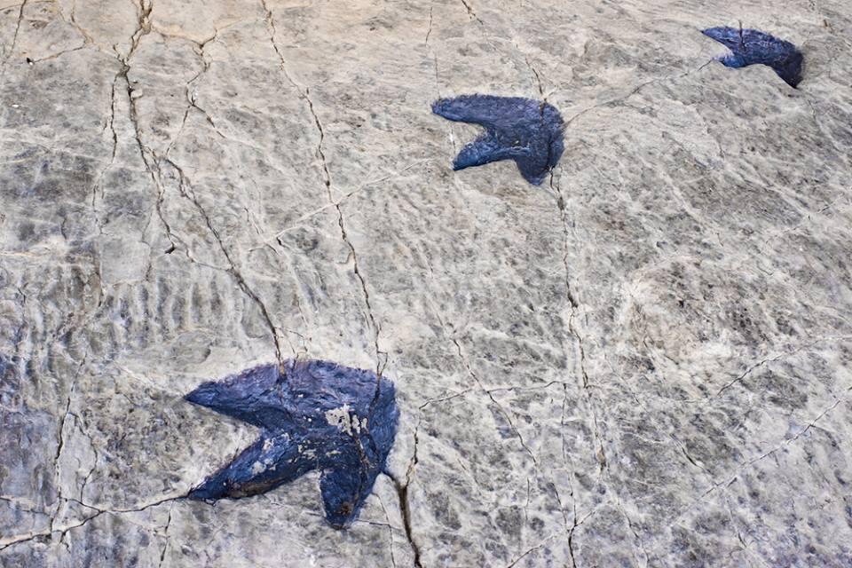 Huellas de dinosaurio, qué hacer en La Rioja