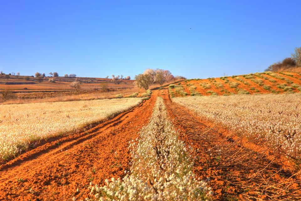 Ruta de bodegas de vino en Valladolid