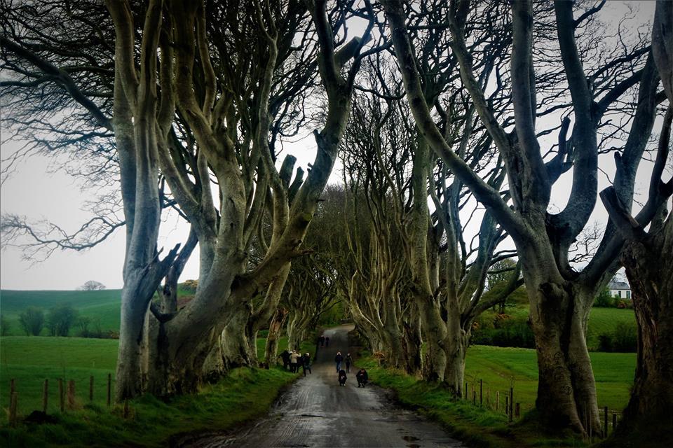 The Dark Hegdes, ruta Juego de Tronos en Irlanda del Norte