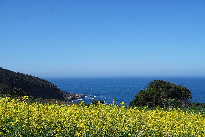 Campos de toxos, Razo, Galicia
