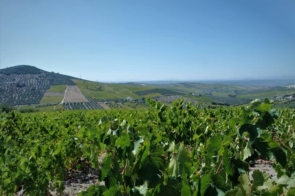 La Toscana montillana