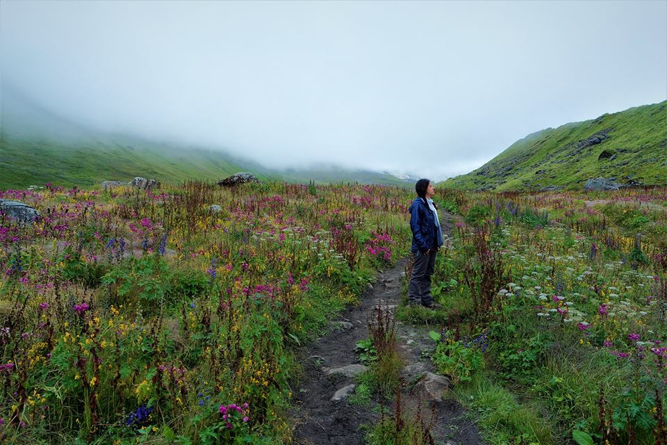Prados de flores. Trekking al Campo Base del Annapurna