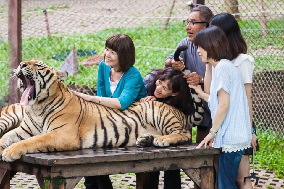 Tigre en un zoológico.
