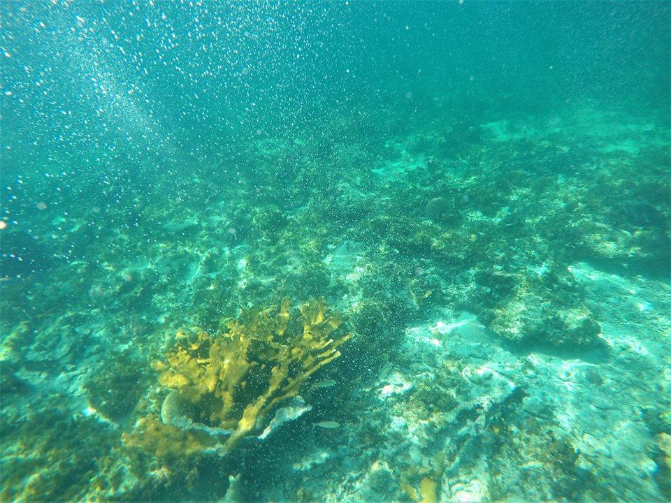 Snorkel en los arrecifes de coral de Riviera Maya