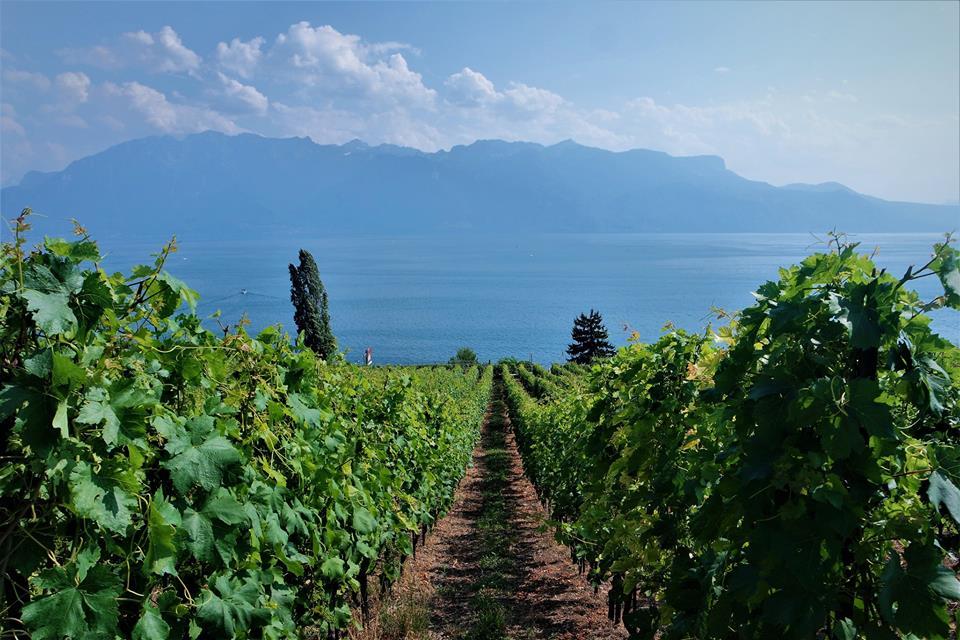 Viñedos del lago Lemán, Suiza
