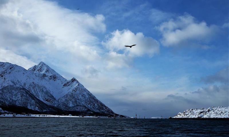 Safari de águilas marinas en Lofoten