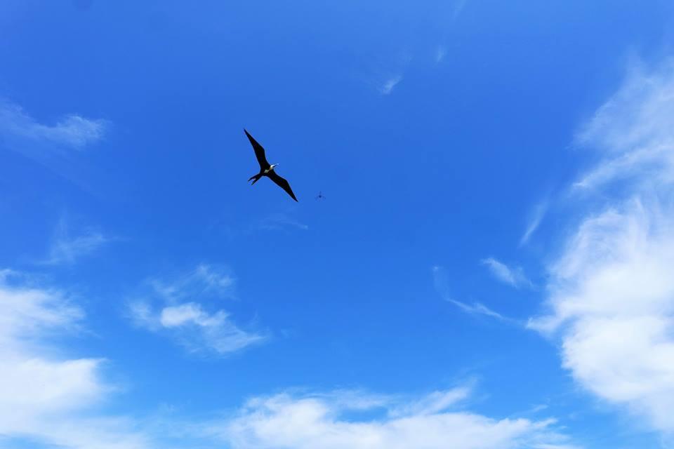 Aves de isla Contoy