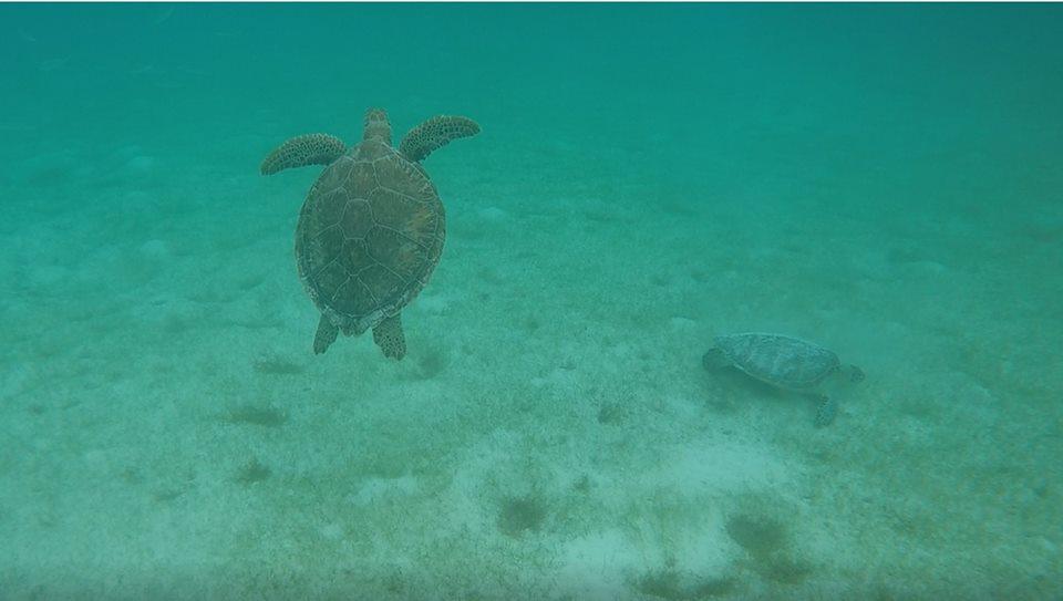 Tortuga marina, reserva en Akumal en Riviera Maya