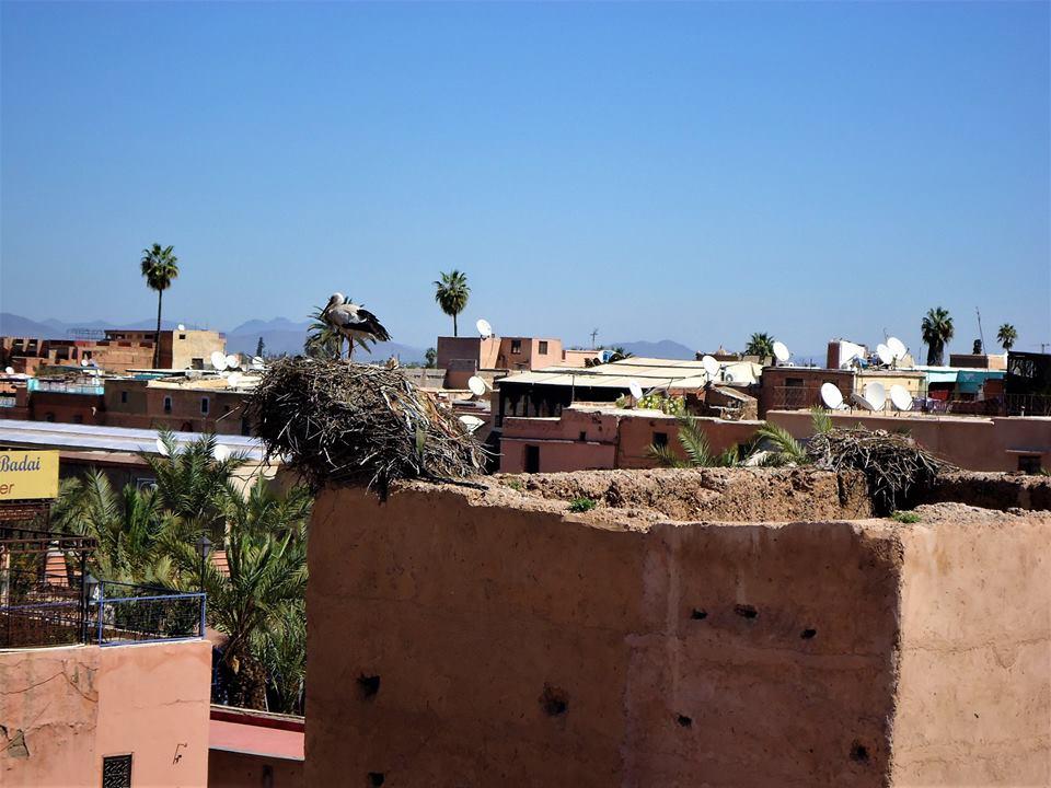 Cigüeña, Palacio El Badi