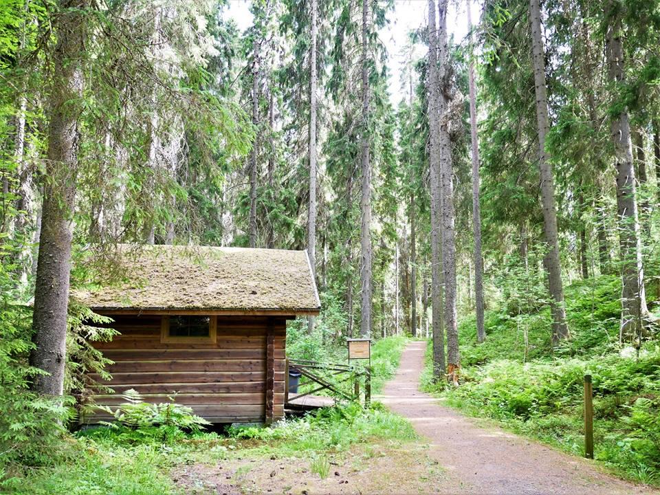 Los bosques de Finlandia