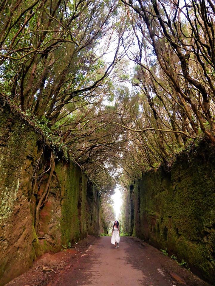 Camino, bosque de Anaga