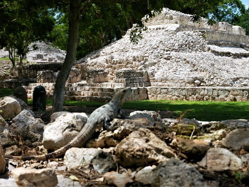 Iguana en Edzná