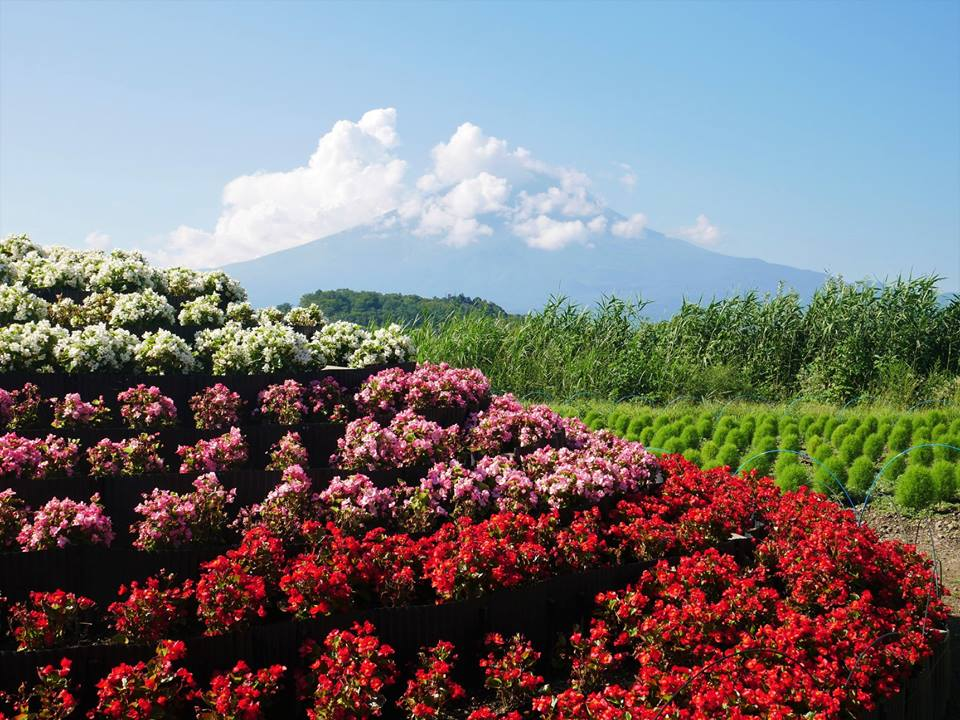 Jardín Botánico y Monte Fuji