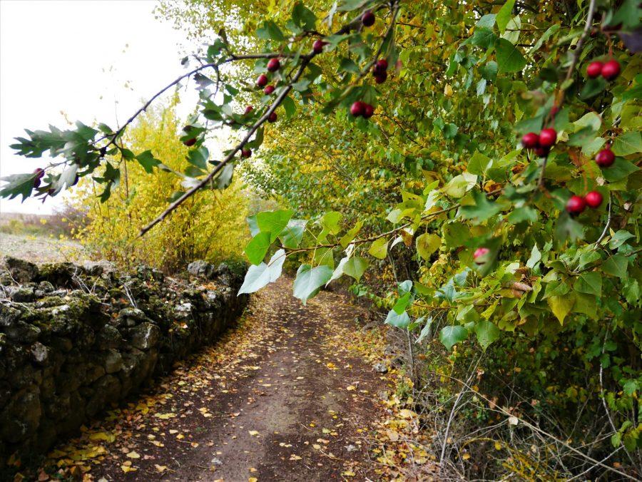 Camino a Valverde